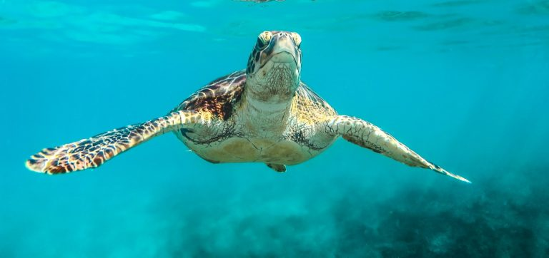 Amazing Saona Island Turtle Sanctuary